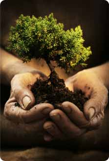Image of seedling in hands